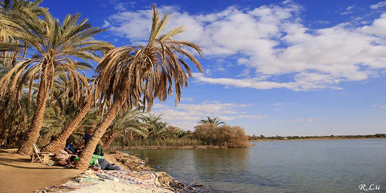 Safari Tour to Siwa from Cairo