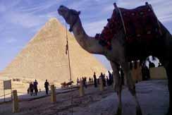 Daily trip: Pyramids Of Giza, Sakkara Pyramid and Memphis